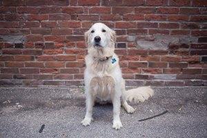 Sadie | Human Resources